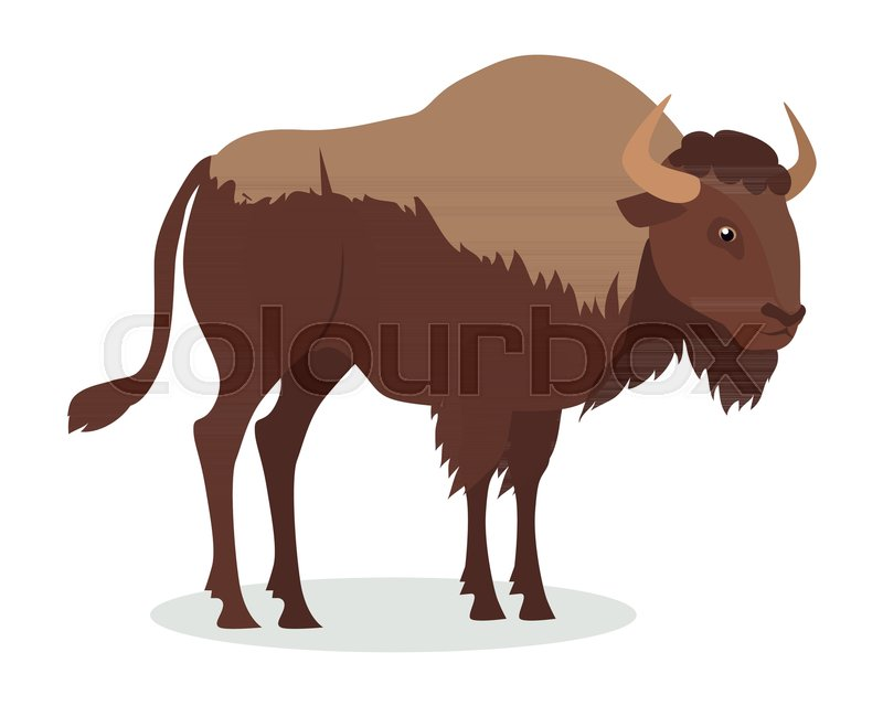 American bison cartoon character. Large bison male flat vector ...