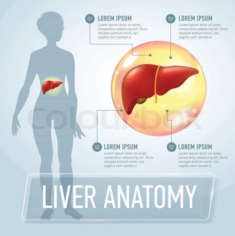 Liver Modern Medical Infographics Stock Vector Colourbox