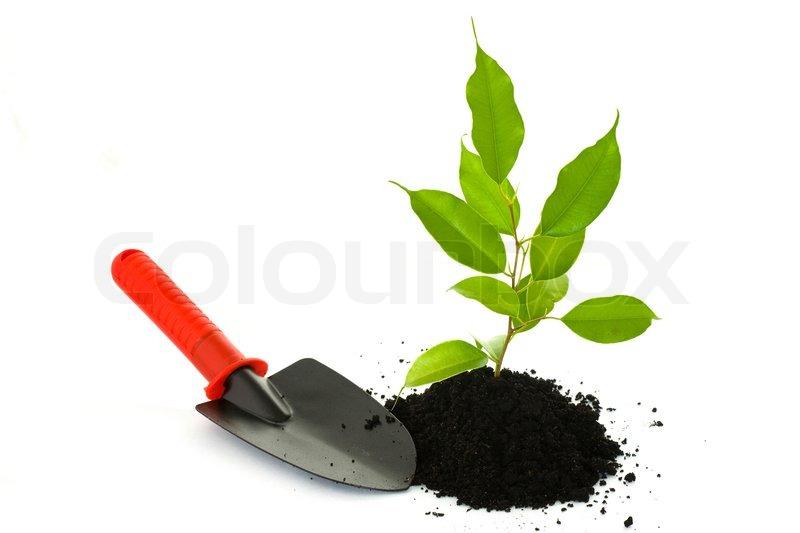 small spade