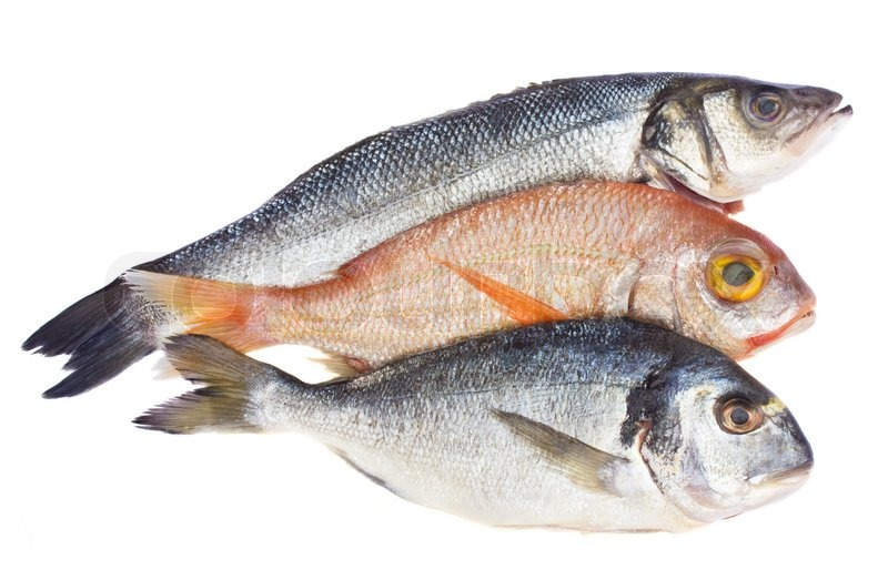 Chiose of fresh raw fish isolated on white background for Best white fish to eat