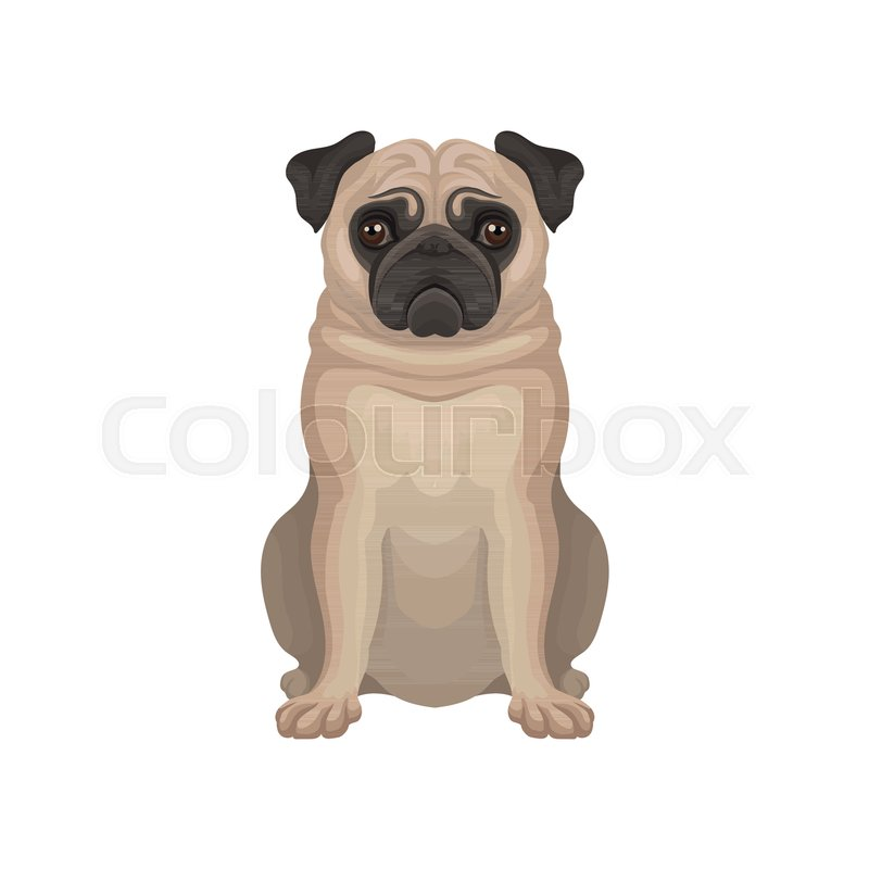 d752d621 Small decorative pug dog with wrinkly, ... | Stock vector | Colourbox