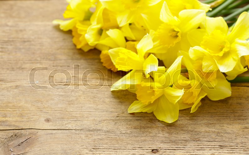 Bouquet spring yellow flowers daffodils stock photo colourbox bouquet spring yellow flowers daffodils stock photo mightylinksfo
