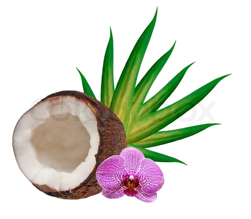 how to get fresh coconut out of shell