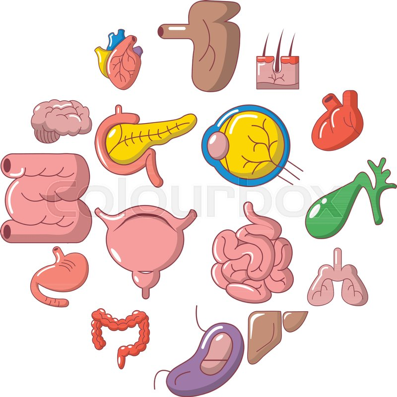 Internal Human Organs Icons Set Cartoon Illustration Of 16 Internal