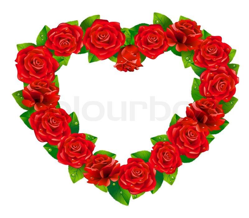 Heart Of Roses On White Background Stock Vector Colourbox
