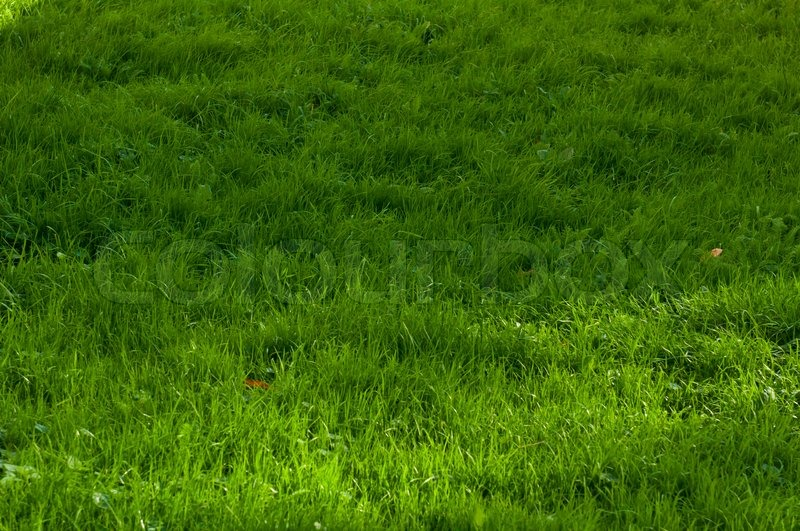 green grass texture from a soccer field top view stock photo