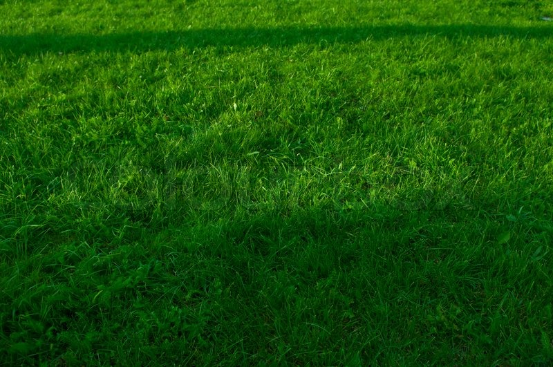 green grass soccer field. Green Grass Texture From A Soccer Field Top View | Stock Photo Colourbox Green E