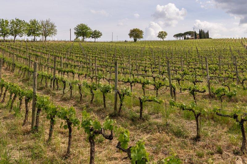 Billedresultat for barolo vingårde