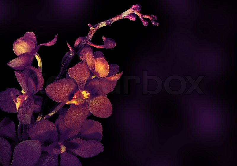 Beautiful Purple Orchid Flower Isolated Stock Photo Colourbox