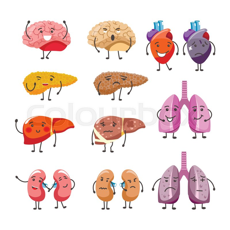 Healthy And Thick Organs With Faces And Limbs Internal Body Parts