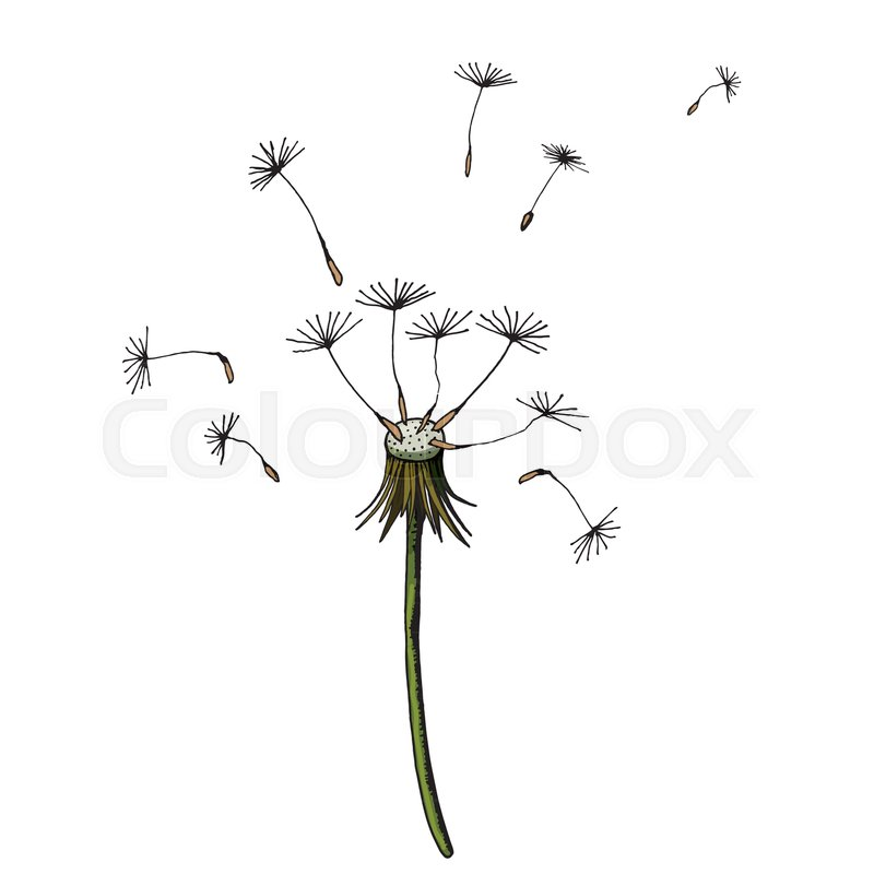 Vector Dandelion Blowing Silhouette Stock Vector Colourbox