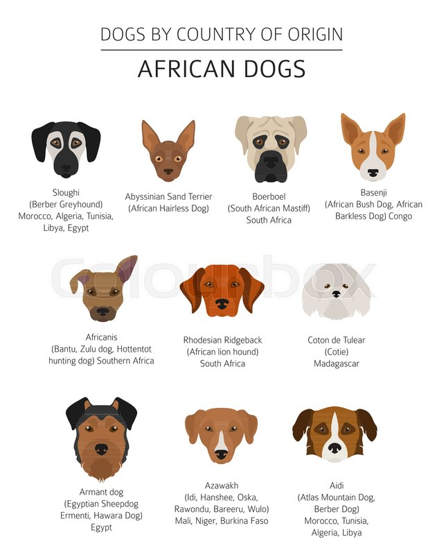 Dogs By Country Of Origin African Dog Breeds Infographic Template Vector Illustration