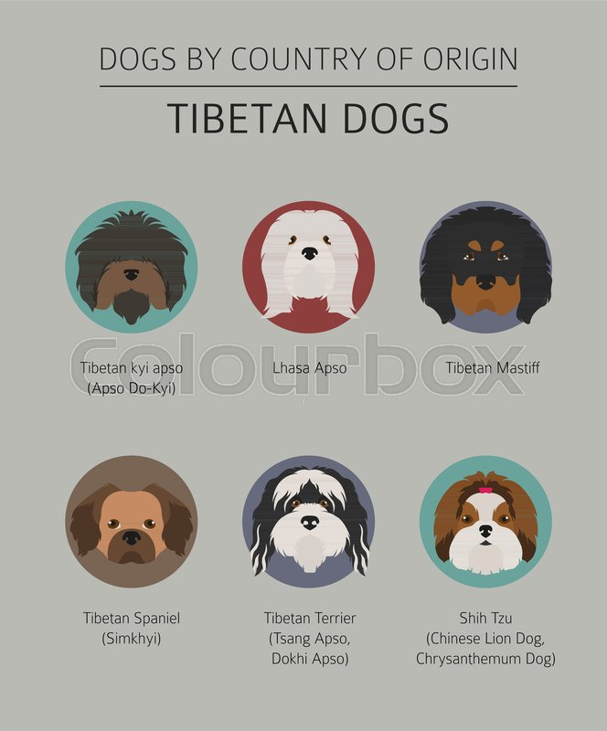 Dogs by country of origin  Tibetan dog     | Stock vector | Colourbox