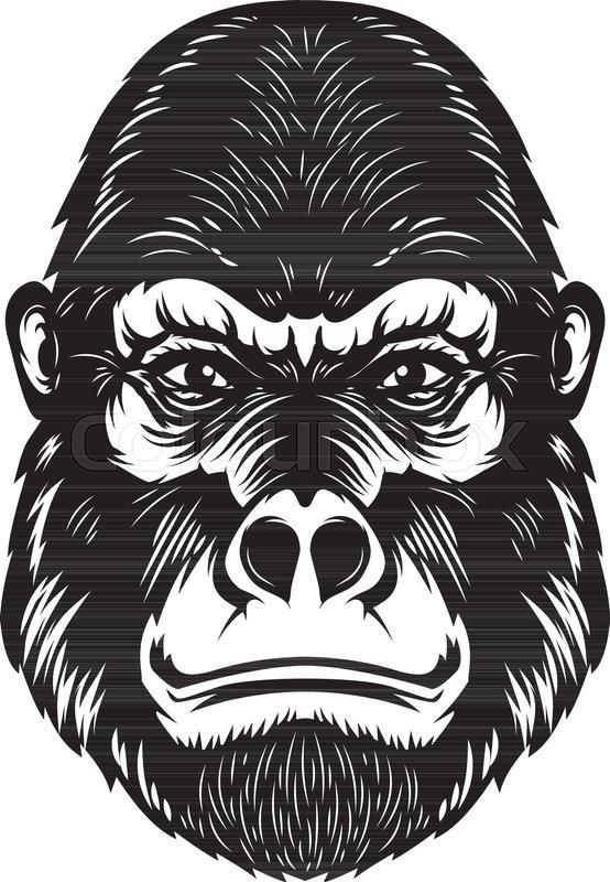 280457da9 Gorilla ape head illustration on white ... | Stock vector | Colourbox