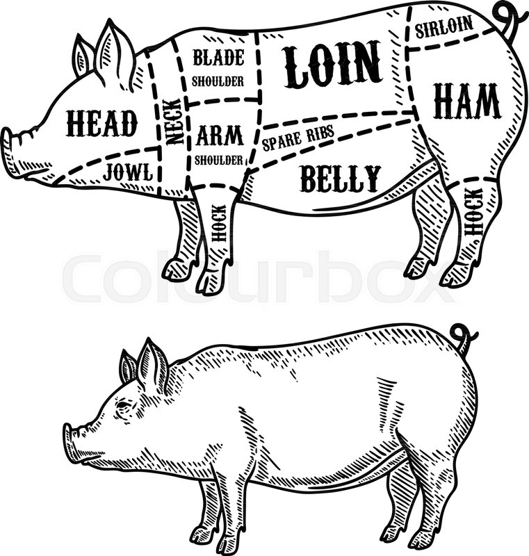 Pig butcher diagram. Pork cuts. Design element for poster, card ...