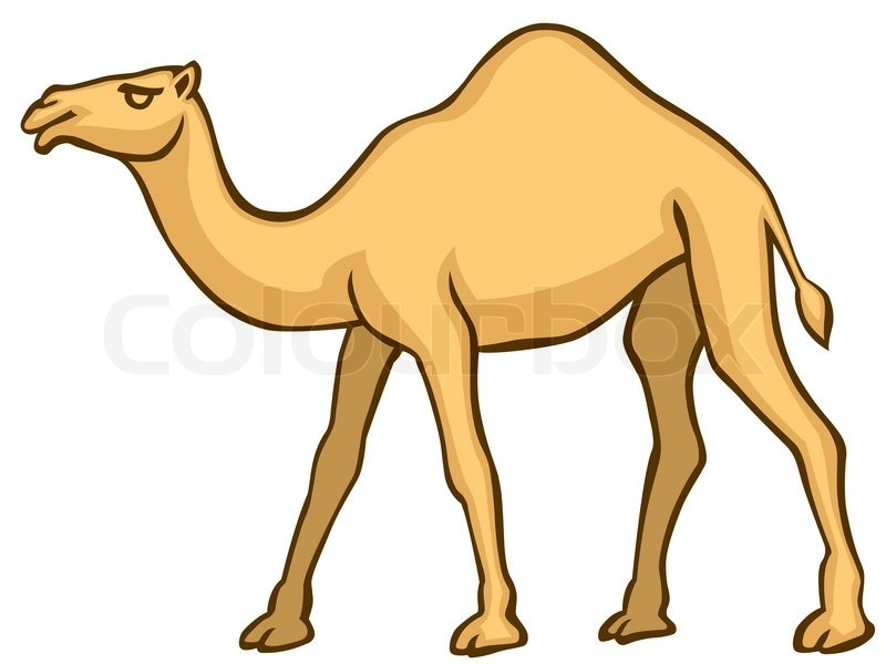 The vector Camel on white background | Stock Vector ...