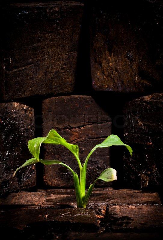 Plant Growing Wallpaper Plant Growing Trough Dead