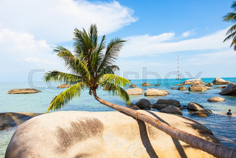 Coconut tree at coconut beach on Son island, Kien Giang, Vietnam. Near Phu Quoc island, stock photo