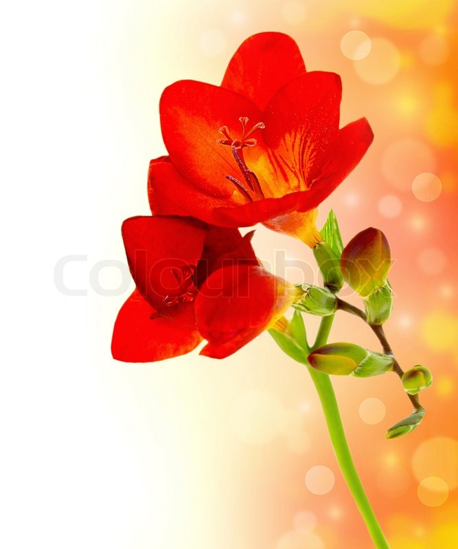 Fresh spring flowers over red yellow bokeh background with text fresh spring flowers over red yellow bokeh background with text space stock photo colourbox mightylinksfo