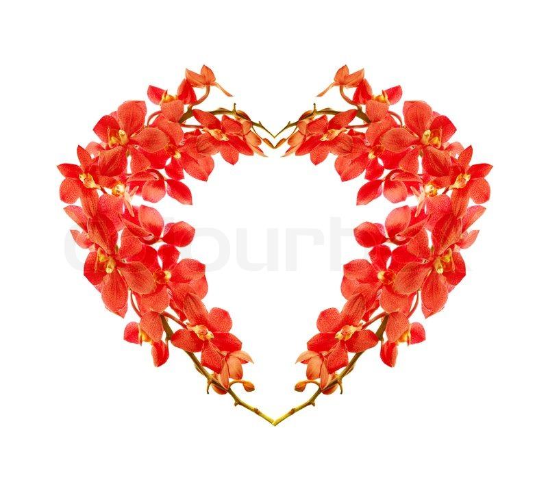 love heart shaped flowerflower - photo #12