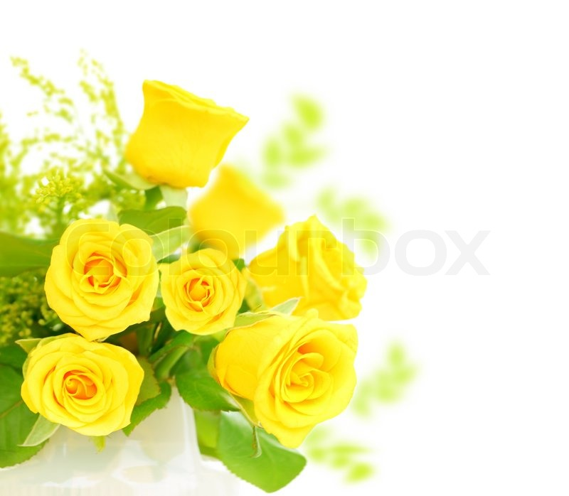 Fresh yellow roses border isolated on white background ...