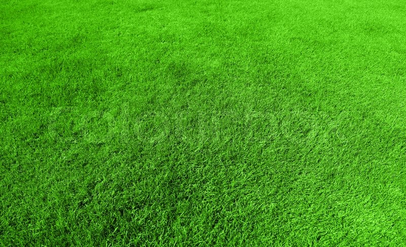 Abstract Green Grass Background, Fresh ...
