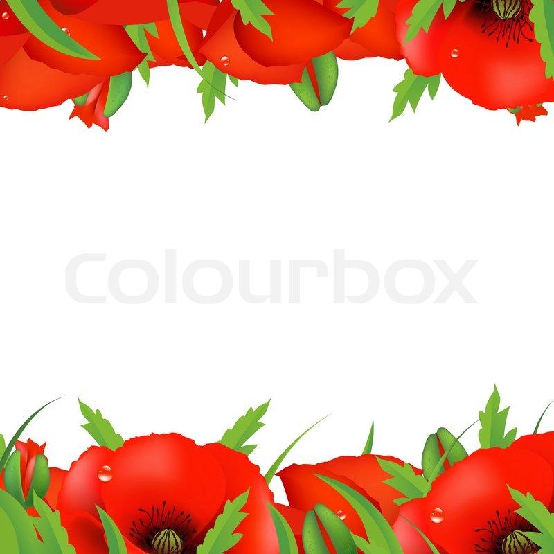 Red Poppy Border Vector Illustration Stock Vector