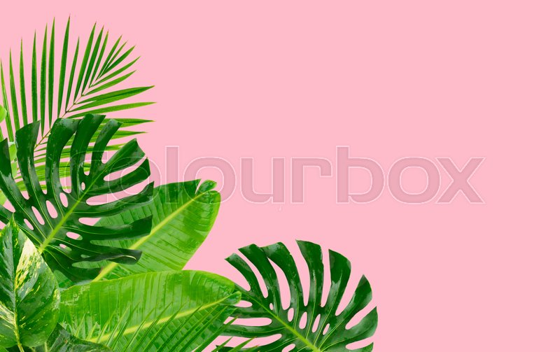 Tropical Green Leaves Frame Over Pastel Stock Image Colourbox Works as a background where you can add images or text. tropical green leaves frame over pastel