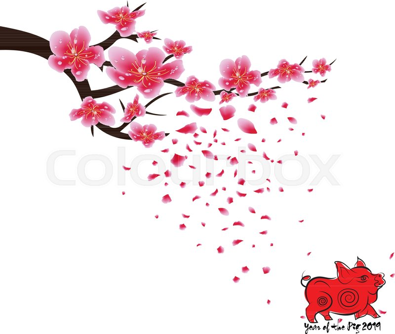 sakura flowers background cherry blossom isolated white background chinese new year stock vector colourbox