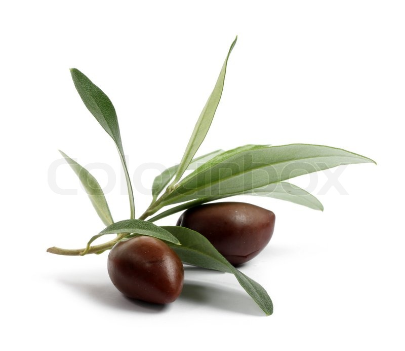 Stock image of 'Fresh olive tree branch with olives'