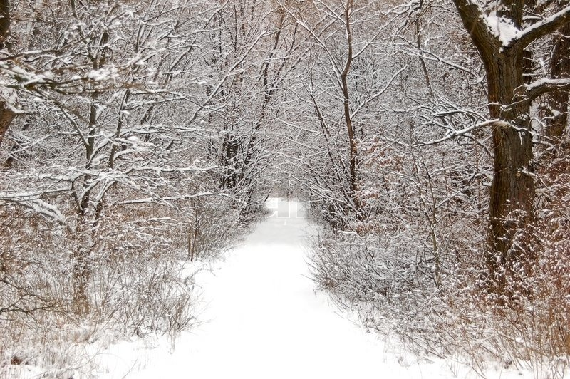Pathway In The Snowy Forest At Winter Stock Photo