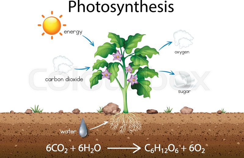 Photosynthesis explanation science diagram illustration stock photosynthesis explanation science diagram illustration stock vector colourbox ccuart Choice Image