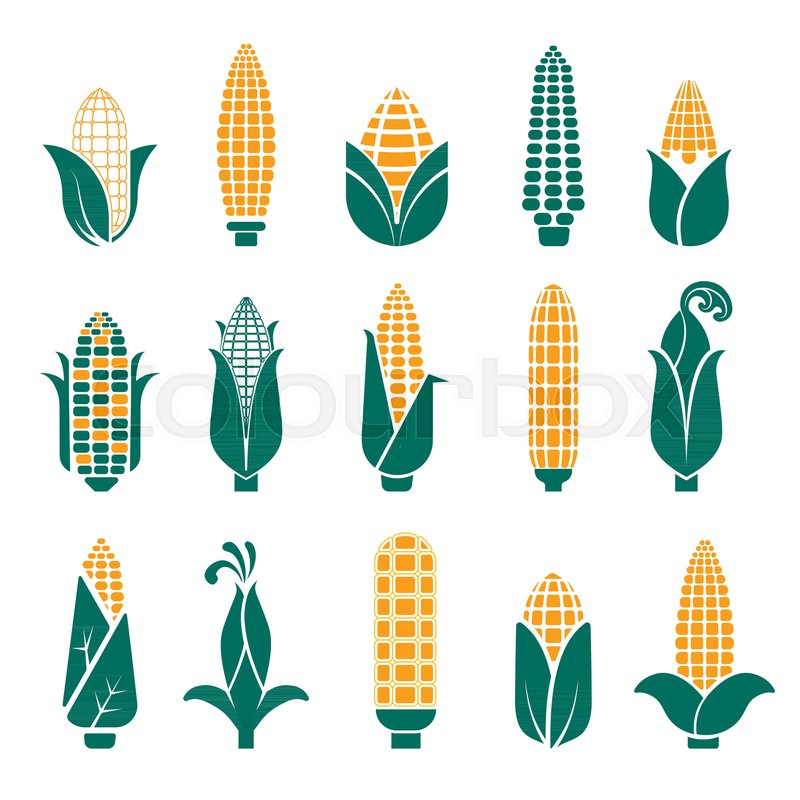 corn cobs vector logo templates for cereal or maize grain product