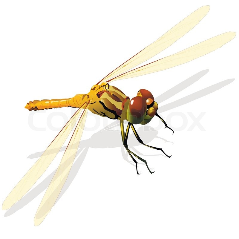 Illustration, grüne Libelle auf einem weißen Hintergrund ...