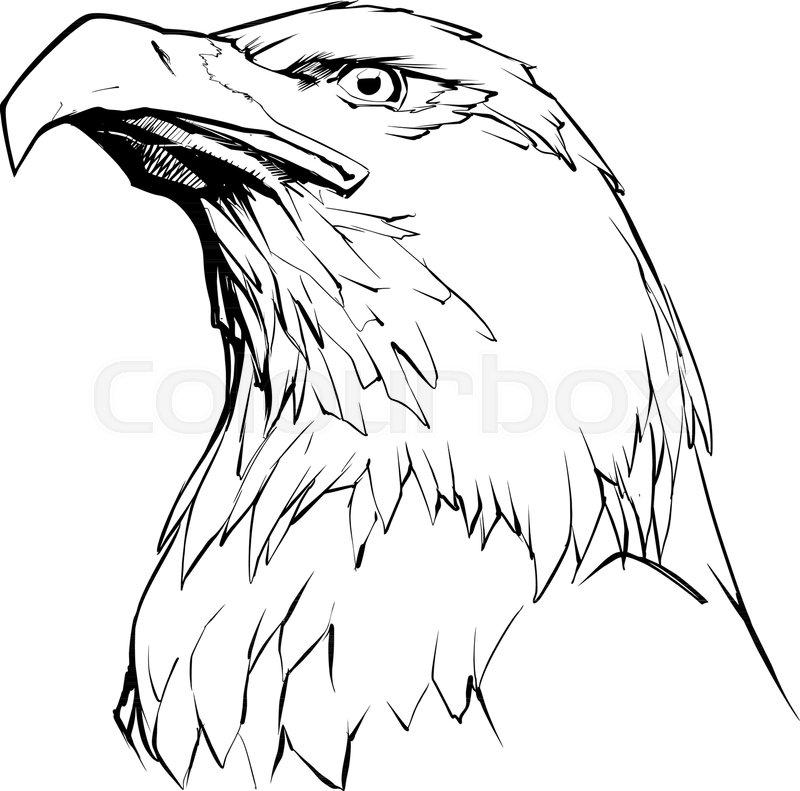 illustration of north american bald stock vector colourbox Philadelphia Eagles