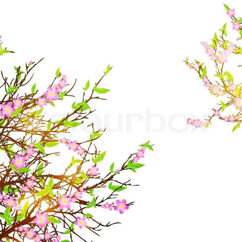 Black And White Cherry Blossom Vector Cherry Blossom Over White