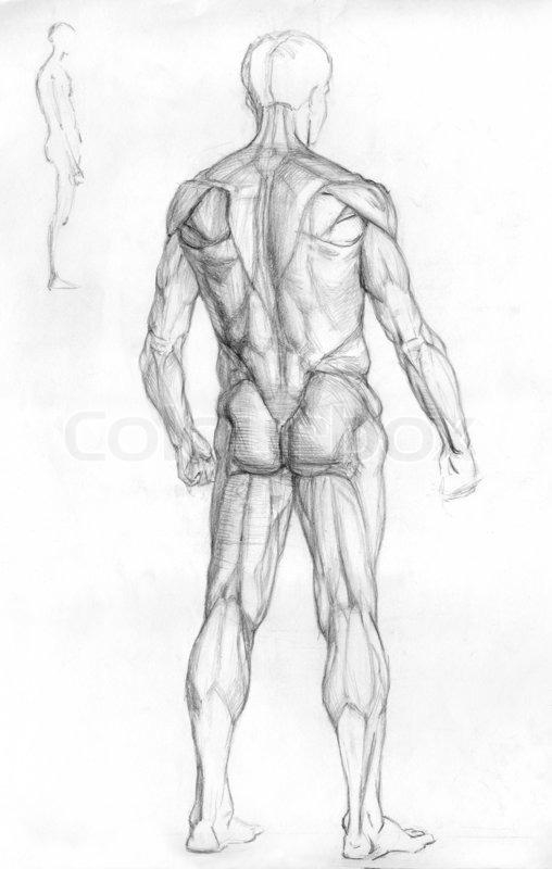 hand-gezogene Bleistift Skizze Abbildung der männlichen menschlichen ...