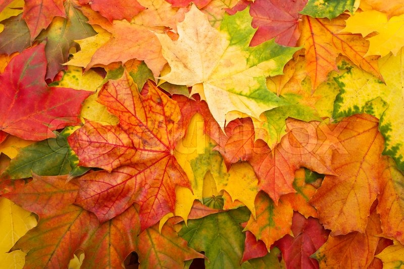 fall leaves for an autumn background stock photo colourbox