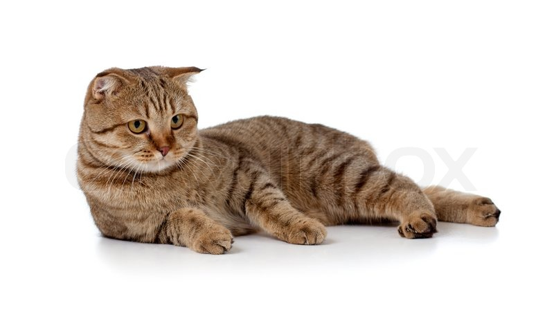 Cat Litter Box Problems   A Guide for Cat Lovers