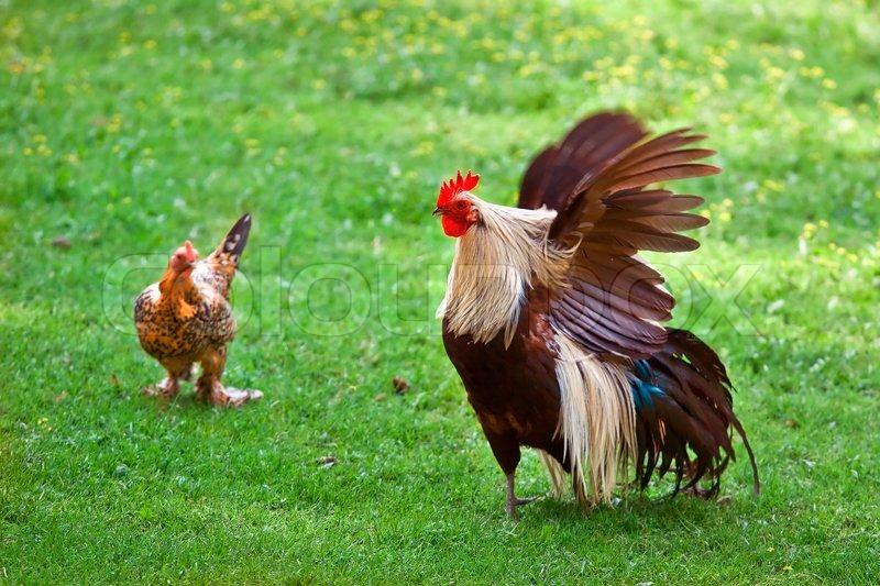 Fett Oma Schleif auf einem Hahn Blick - filme