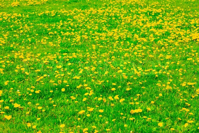 Spring lawn with yellow flowers stock photo colourbox mightylinksfo