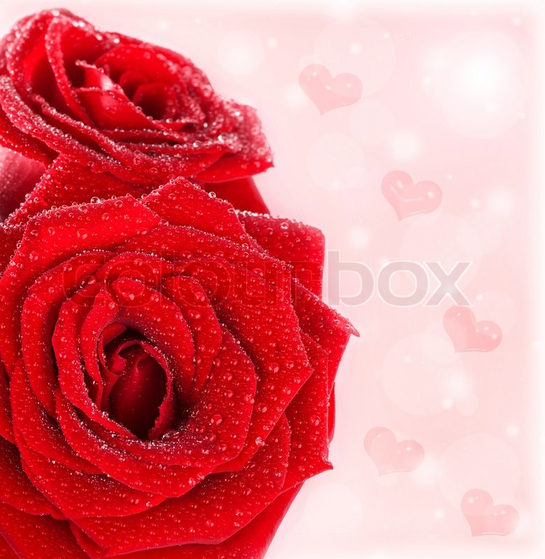 buy stock photos of flower bouquet  colourbox, Beautiful flower