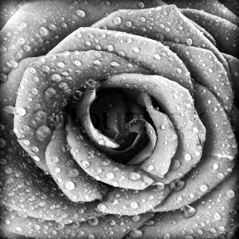 Nature Photography Art Black And White Wallpaper Flowers Tumblr