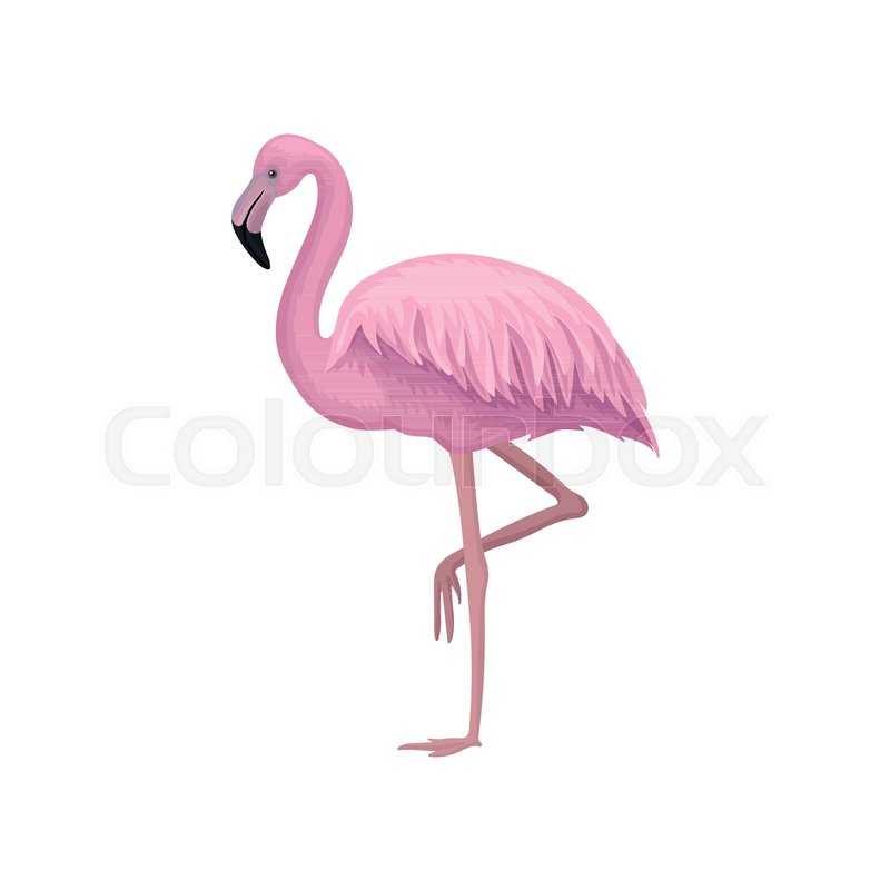 Icon of beautiful flamingo with gentle pink feathers, long legs and ...