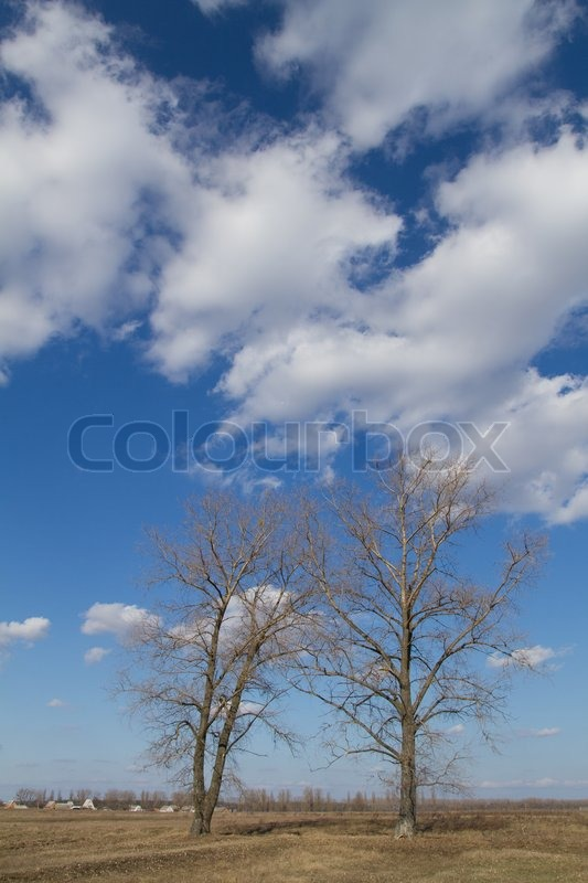 Stock image of 'Two spring trees on the backgrounds blue sky'