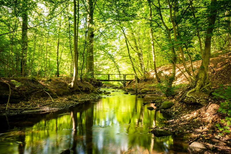 green forest with a river running