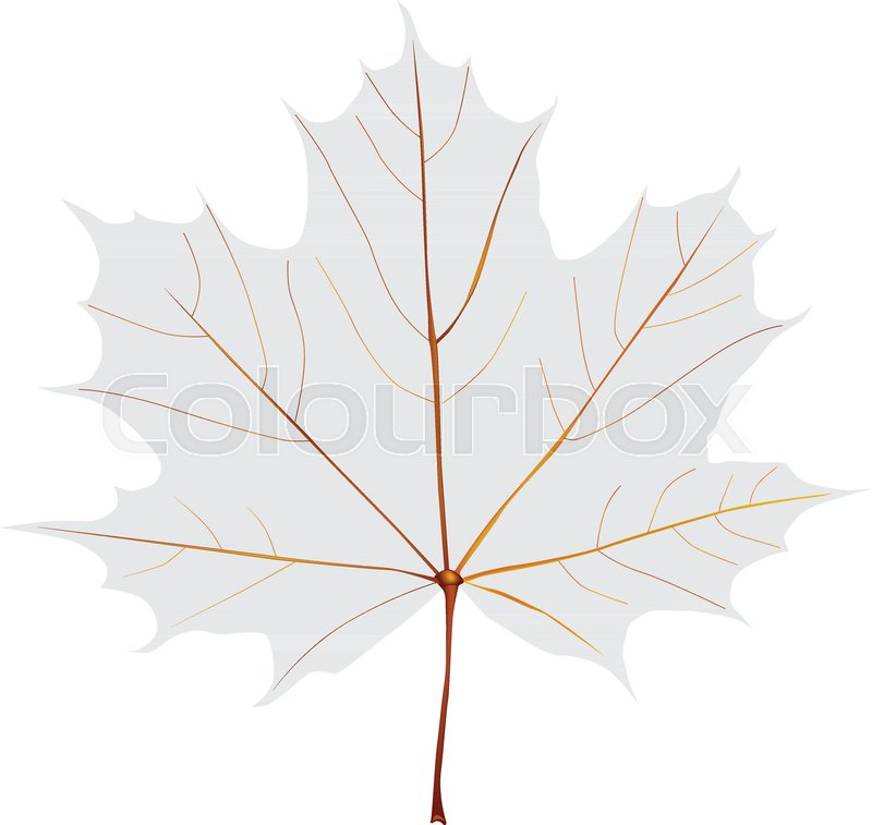 Gray Symbolic Maple Leaf With Streaks Vector Illustration Stock