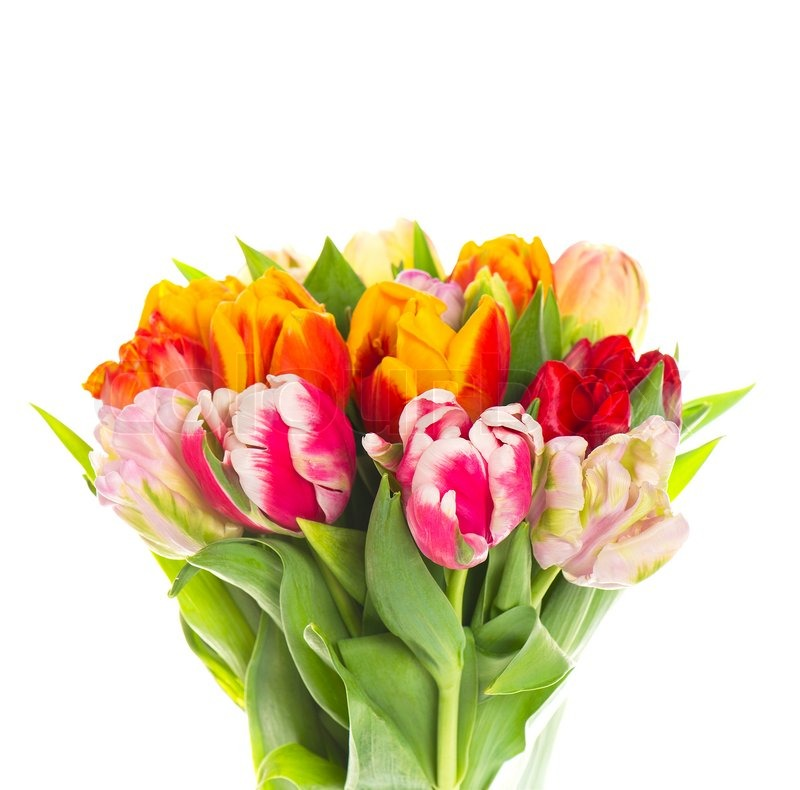Bouquet Of Fresh Colorful Tulip Flowers On White Background