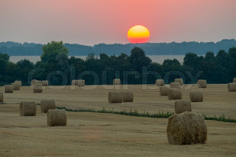 The orange sunset sunset sinks on the horizon above the field with haystacks, stock photo