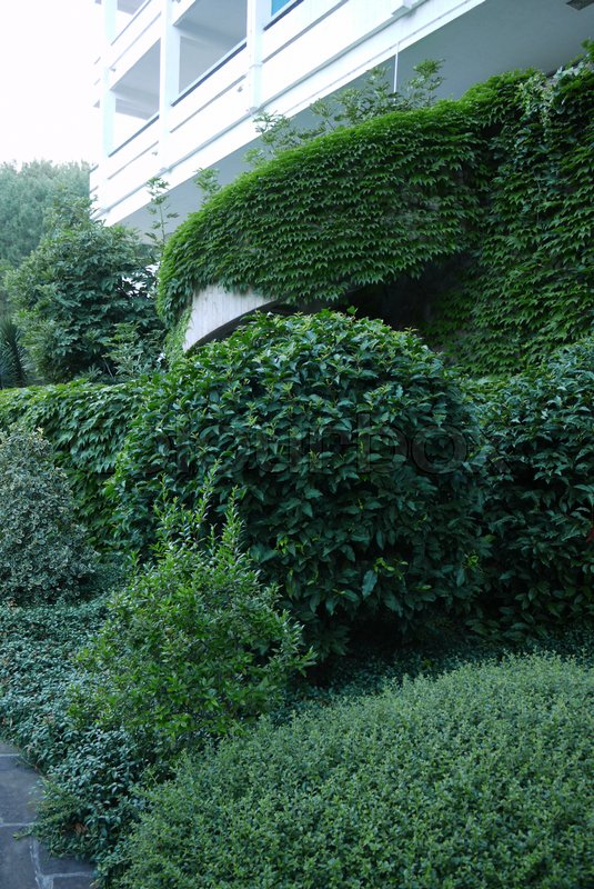 Gently trimmed green bushes against the white balcony of the sanatorium complex, stock photo